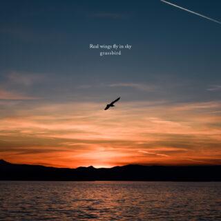 Real wings fly in sky